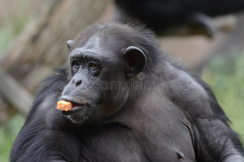 Sweet potato snack2 royalty free stock image