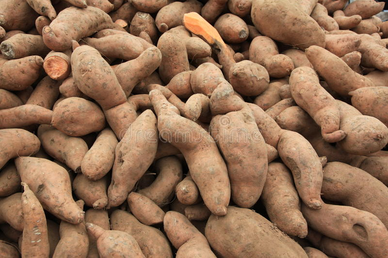 Download Sweet Potatoes Royalty Free Stock Images - Image: 12933679