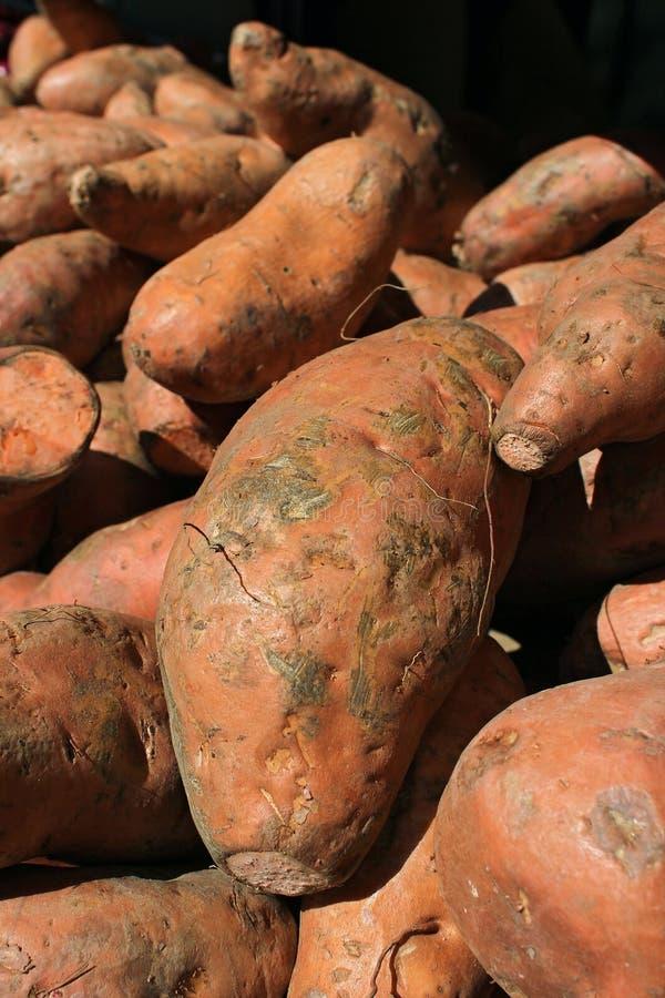 Sweet potatoes. Organic sweet potatoes at the market stock images