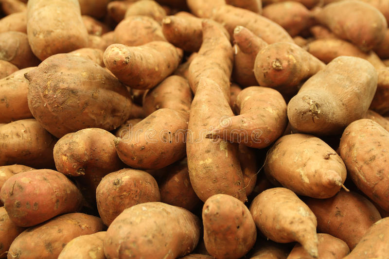 Sweet Potatoes. This is an image of many sweet potatoes in a grocery store stock images