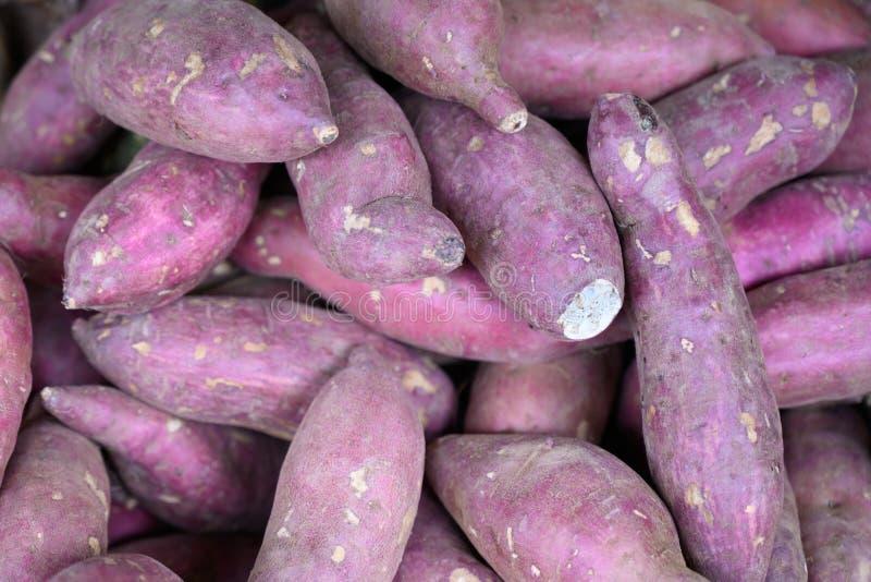 Sweet potatoes - Ipomoea batatas royalty free stock image