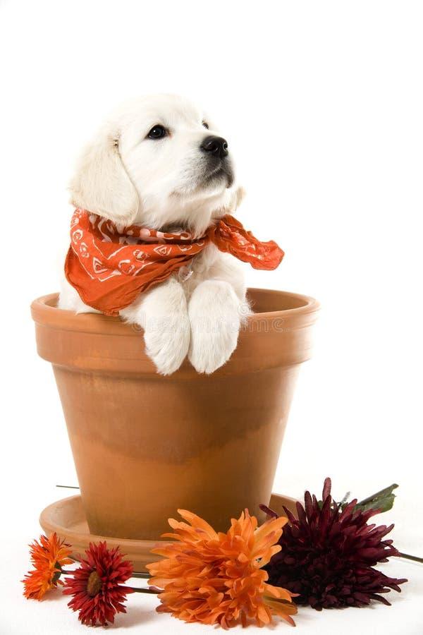 Sweet puppy stock photo