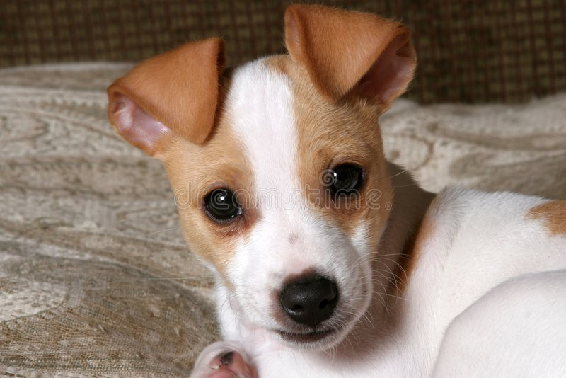 Sweet Puppy face. A close-up of an adorable puppy stock images