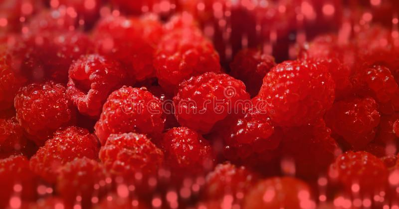 Sweet raspberry background many berries banner. Close up stock photos