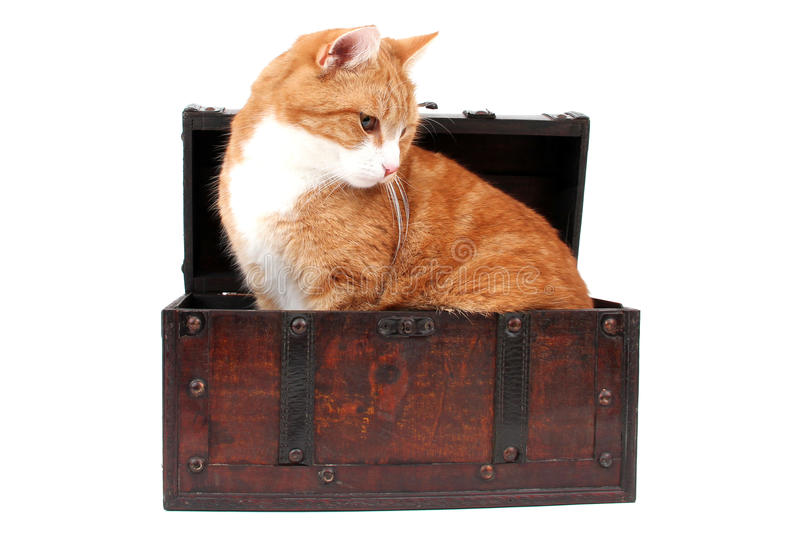 Sweet red cat in treasure chest stock photos