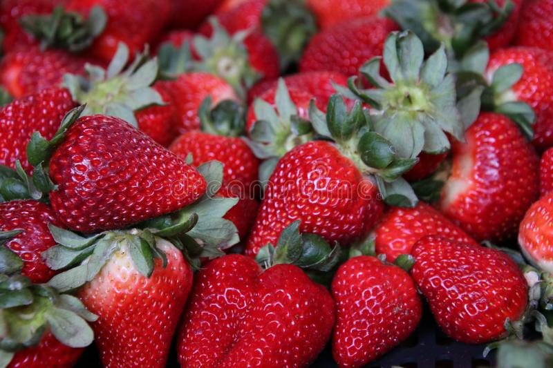 Sweet red strawberries. Sweet strawberries, red and green, delicious look and taste stock image