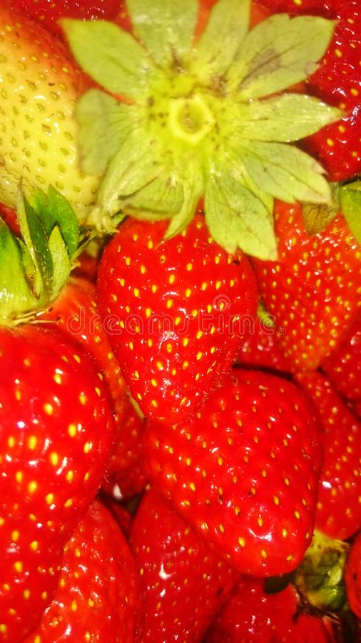Sweet and red strawberries stock images