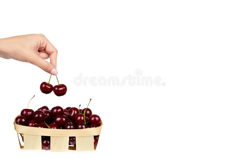Sweet ripe cherry in package with hand isolated on white background, copy space template. stock images