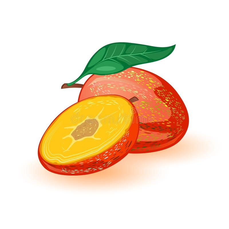 Sweet ripe mango whole and half. Tropical exotic stone fruit with leaf. royalty free illustration