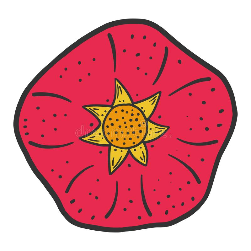 Sweet ripe pomegranate. Vector concept in doodle and sketch style. Hand drawn illustration for printing on T-shirts, postcards, vintage, fruit, food, healthy stock illustration