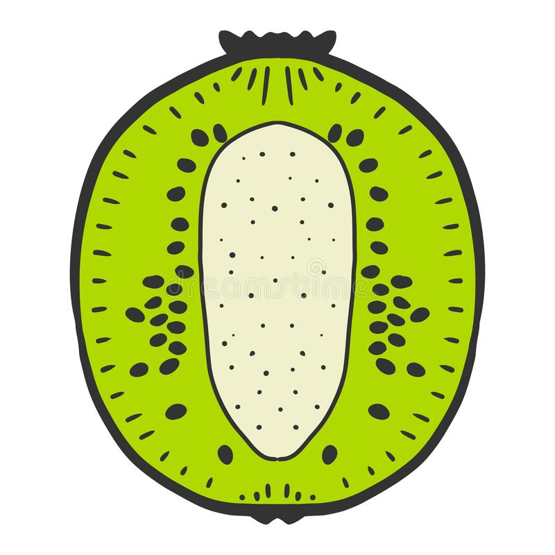 Sweet ripe slice of kiwi. Vector concept in doodle and sketch style. Hand drawn illustration for printing on T-shirts, postcards, fruit, fresh, food, design vector illustration