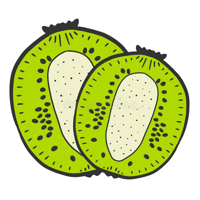 Sweet ripe slice of kiwi. Vector concept in doodle and sketch style. Hand drawn illustration for printing on T-shirts, postcards, fruit, fresh, food, design stock illustration