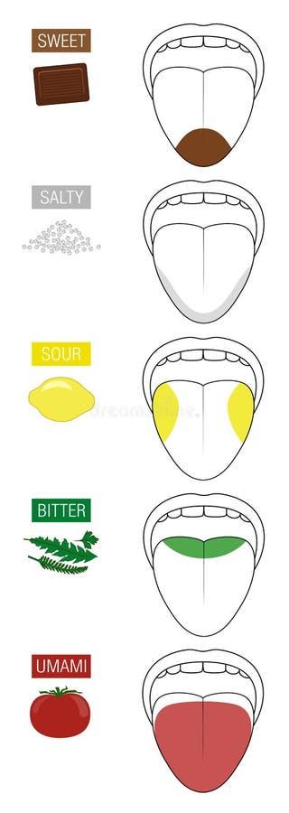 Sweet Salty Sour Bitter Umami Taste Tongue stock illustration
