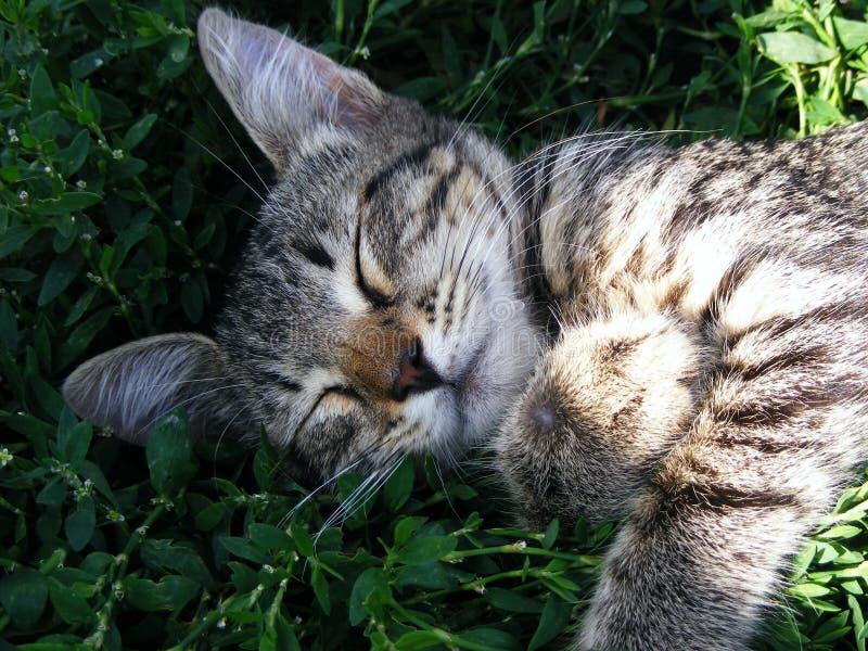 Download Sweet Sleep Stock Images - Image: 26180524