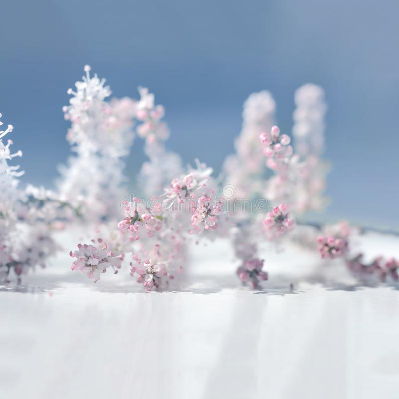 Sweet soft pink flowers. Spring blossom stock photography