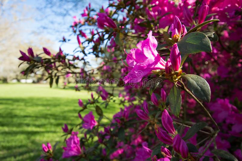 Sweet Spring Time royalty free stock images