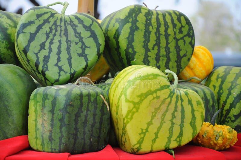Sweet watermelon stock image