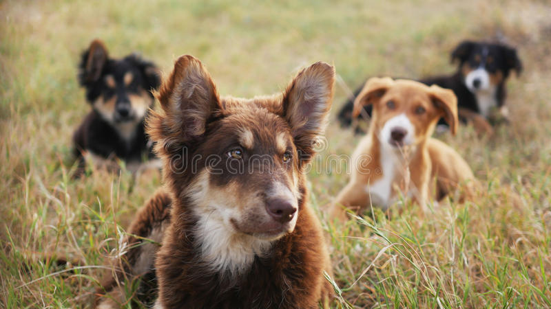 Sweet wild dogs royalty free stock photography