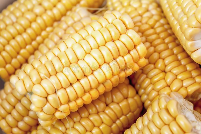 Sweet  yelow corn in close up stock photography
