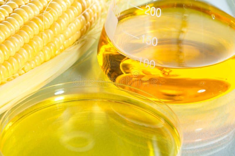 Sweetcorn do xarope do combustível biológico ou do milho fotografia de stock royalty free