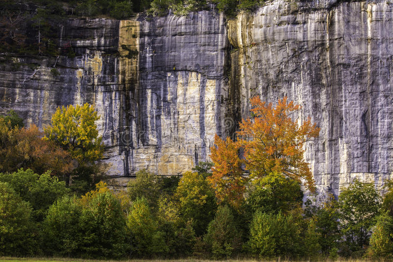 Sweetgum Tree and Bluffs royalty free stock photos