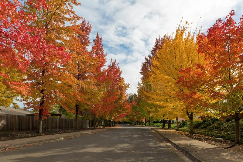 Sweetgum Trees Foliage Lined Street during Fall Season. American Sweetgum trees canopy lined winding street with fall foliage during autumn season in Oregon royalty free stock photos