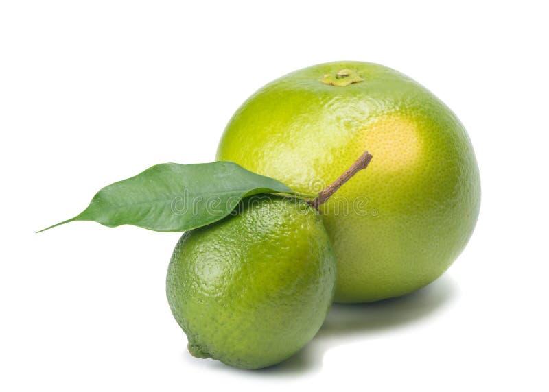 Sweetie при лимон и ветвь, изолированные на белой предпосылке стоковые фотографии rf