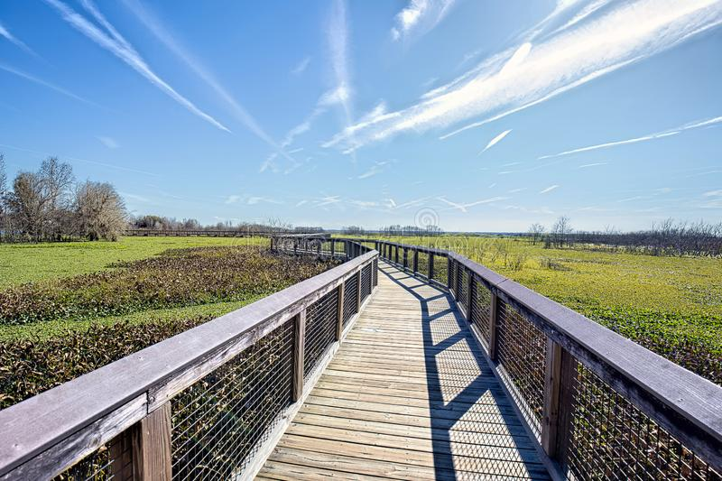 Sweetwater Wood Trail, Boardwalk At Wetlands Park stock photos