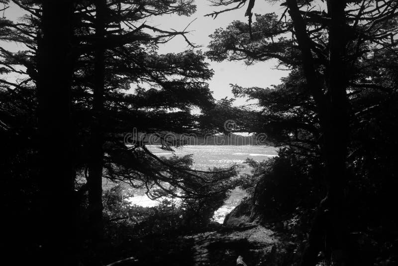 Frame Coastal trees Rainforest clearcut pristine stock images