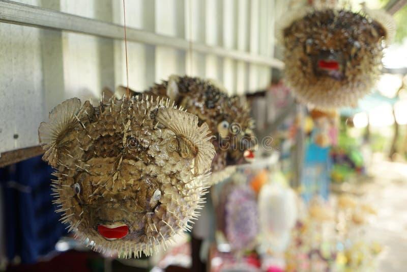 Swellfish zdjęcie stock