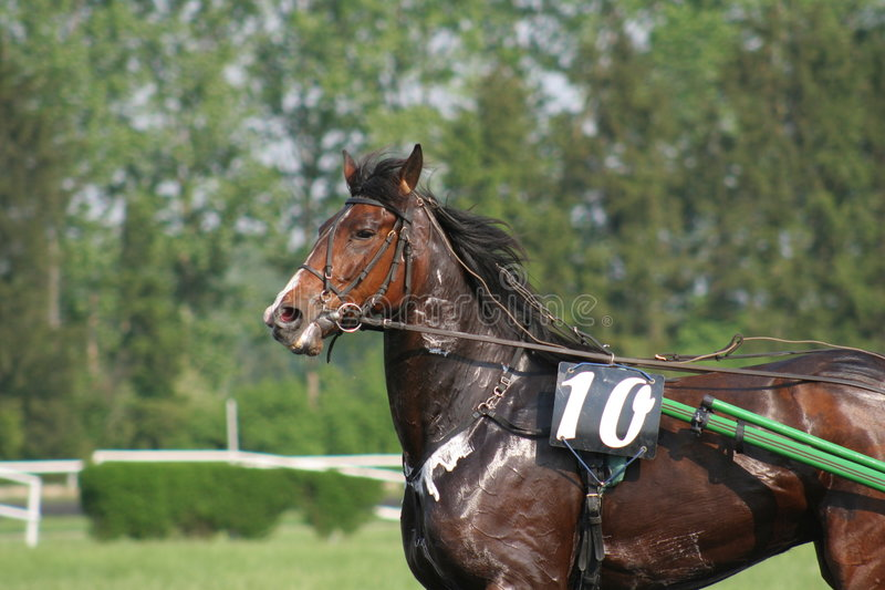 Download Swety Horse Royalty Free Stock Photos - Image: 751858