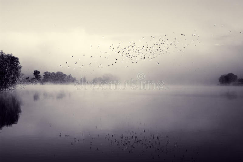 Swifts above water royalty free stock photo