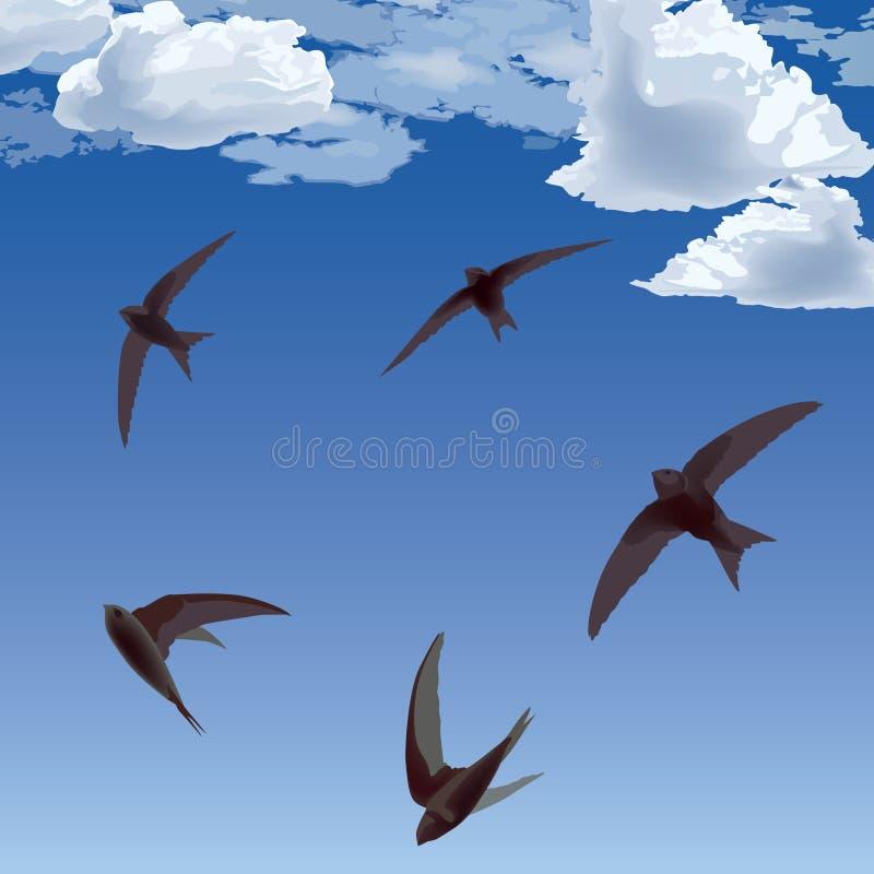 Swifts dos pássaros de vôo no céu ilustração do vetor