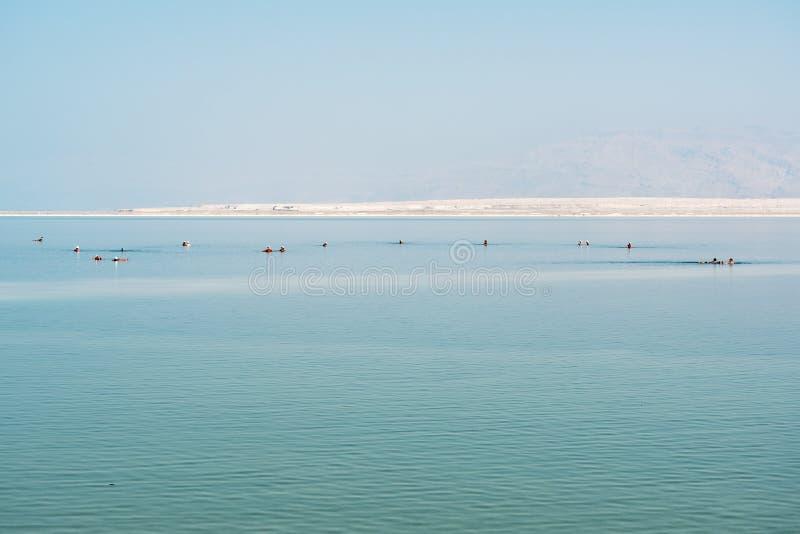 Swimers no Mar Morto, Ein Bokek, Israel imagens de stock royalty free