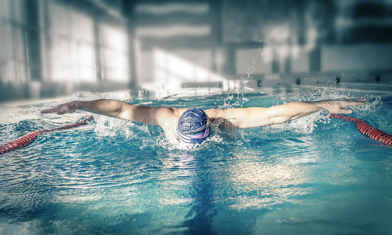 Swimmer in a swimming pool. Swimmer training for the butterfly stroke in a swimming pool royalty free stock photos