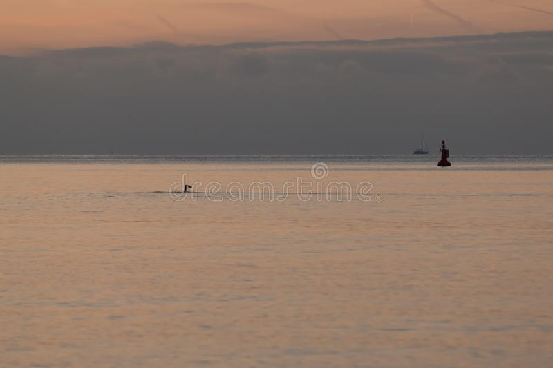 A swimmer taking an early morning dip in the sea at Brighton stock image