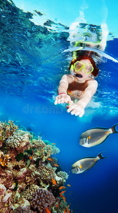 Swimming with the fishes royalty free stock image