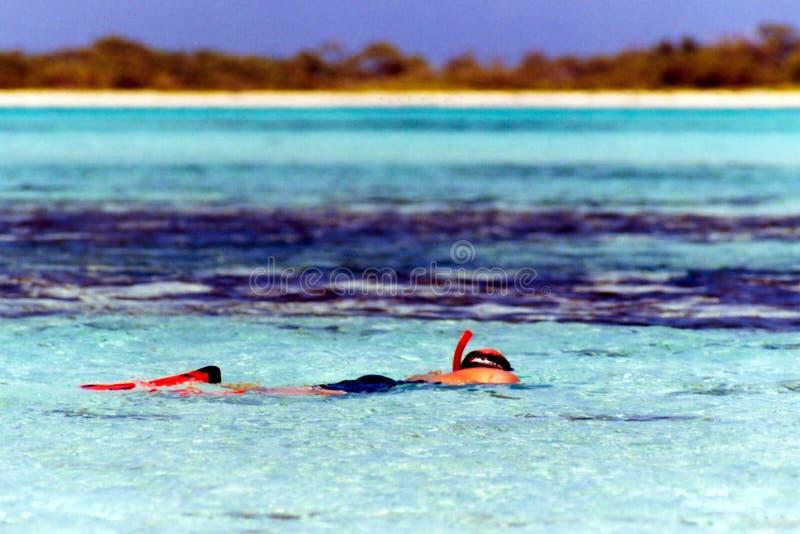 Man snorkeling in sea royalty free stock photo