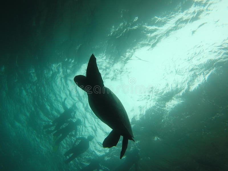 Swimming over a turtle royalty free stock photography