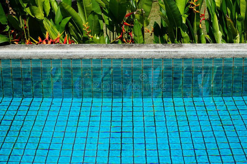 Swimming pool clear water showing turquoise blue clay square tiles and grey cement grout lines with sandwash edge. And Bird of Paradise flower in red and yellow stock photos