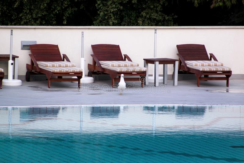 Swimming pool of luxury holiday hotel, amazing view and scene of seagull enjoying alone. Relax near pool with handrail, sunbeds. stock photo