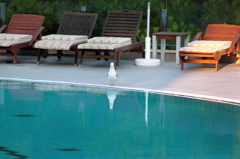 Swimming pool of luxury holiday hotel, amazing view and scene of seagull enjoying alone. Relax near pool with handrail, sunbeds. stock images