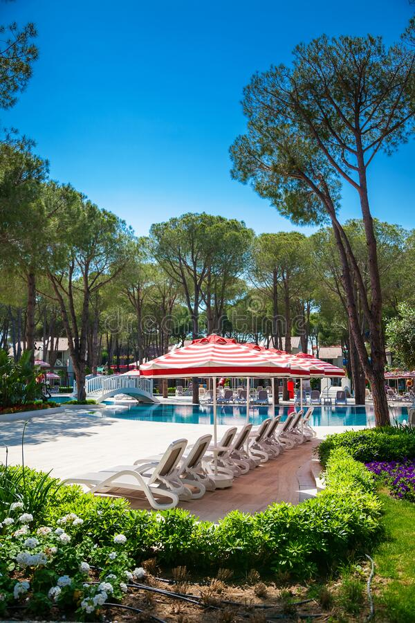 Swimming pool among pine trees stock image