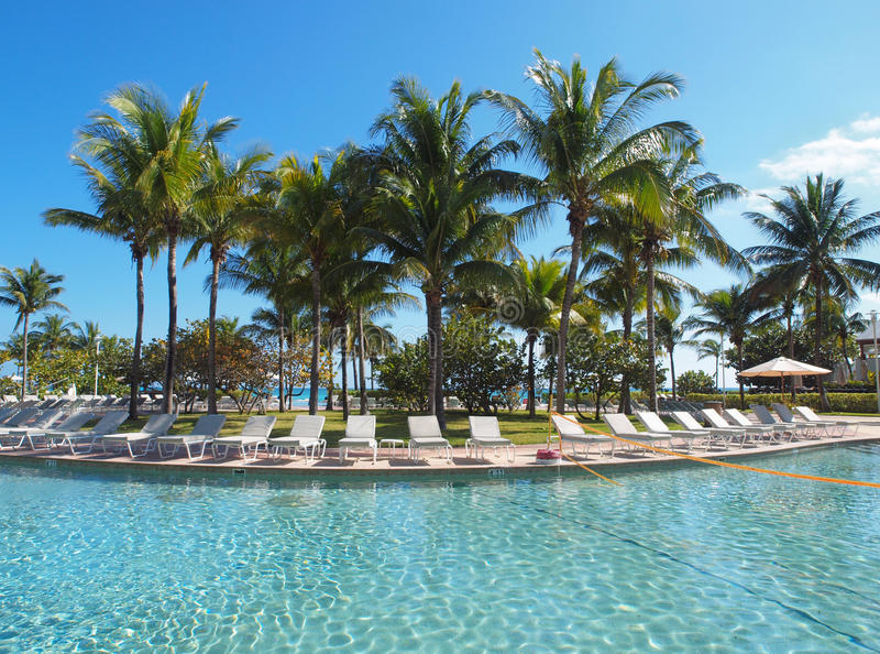Download Swimming pool in a resort stock image. Image of tree - 12706917
