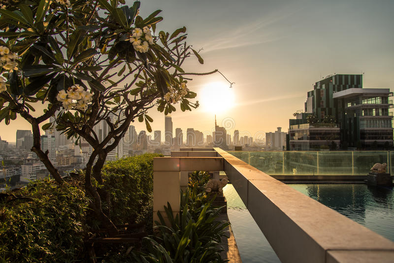 Swimming pool and tree at 19th floor stock photography