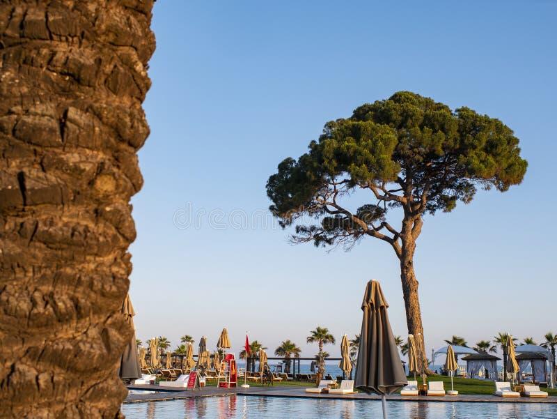 Swimmingpool gegen den blauen Himmel und einen großen Baum Tropischen Ferien in einem Luxusstrandhotel, eine Luxusreise lizenzfreie stockbilder