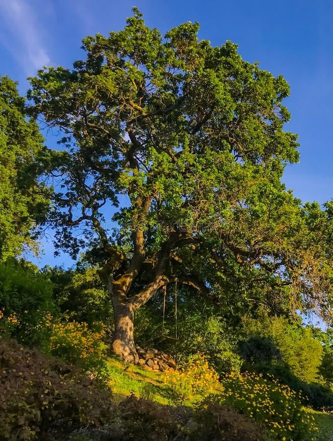 Swing Backyard de California fotografía de archivo libre de regalías