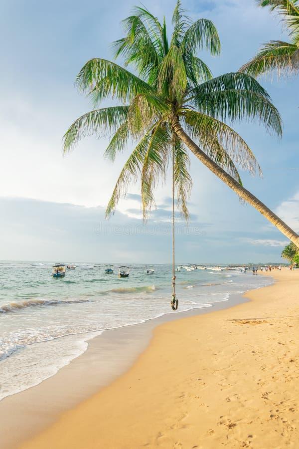 Swing eller bungee hängande på ett palmträd på stranden mot bakgrund av havet och båtar vid solnedgång, Sri Lanka royaltyfri foto