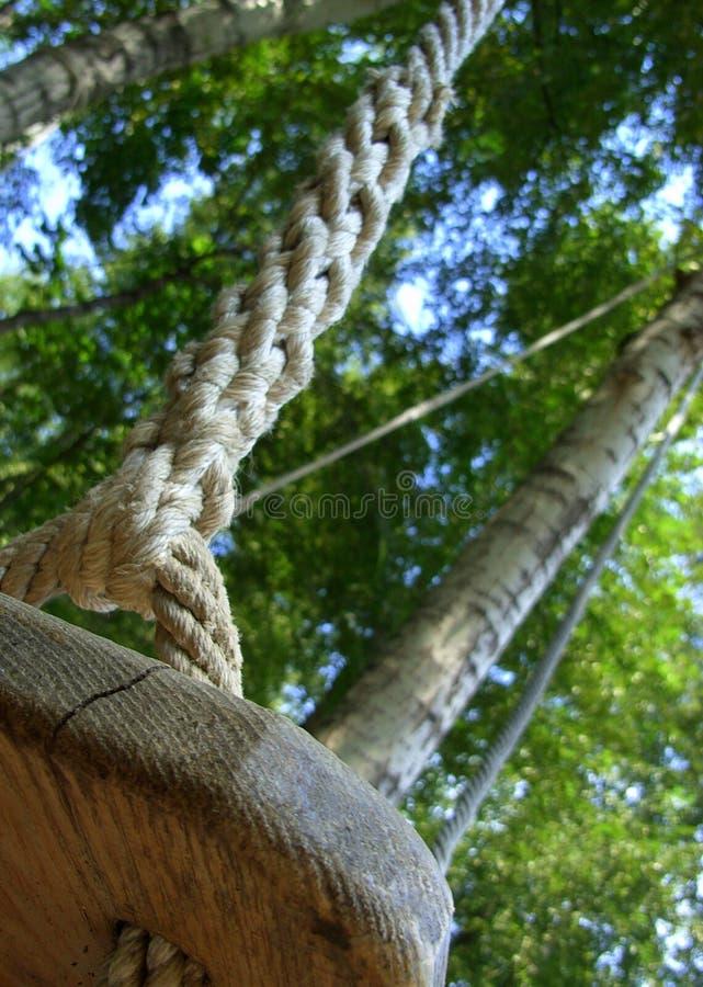 swing för tät look upp arkivbilder