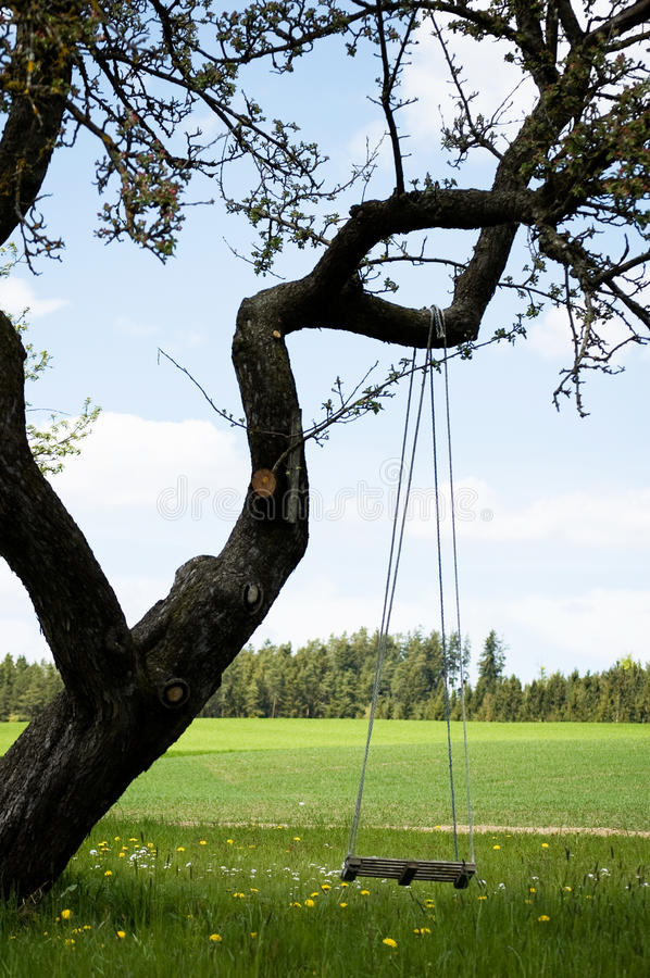 Swing on a gnarly Tree. Empty Swing on a gnarly Tree royalty free stock images